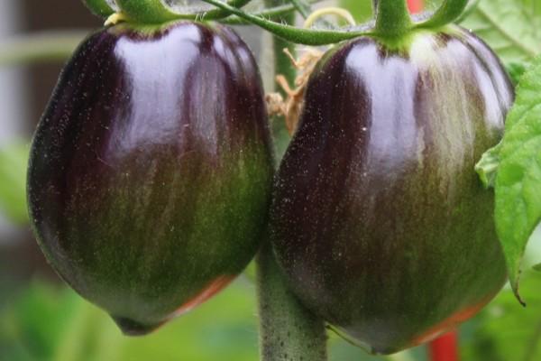 nuzhno-znat-o-pomidorah-2