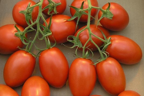 nuzhno-znat-o-pomidorah-3